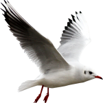 aves-46